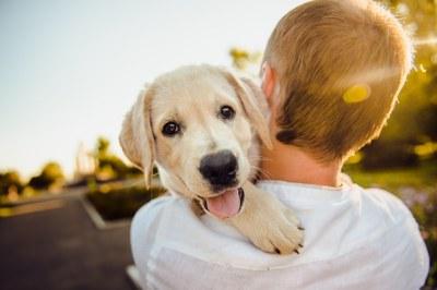 Poplatek ze psů